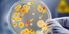 食物放冰箱一定安全吗,小心不怕冷的细菌!